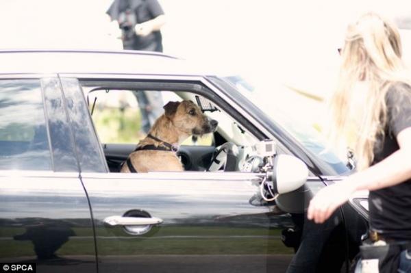 Младшая Лохан тоже села за руль
