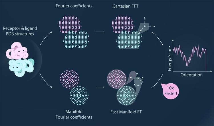 В новом алгоритме белки описываются в системе радиально-сферических координат, которая сама по себе максимально приближена к форме белка