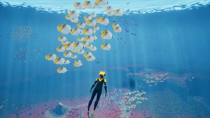 Наблюдать за скоплениями рыб никогда не надоедает