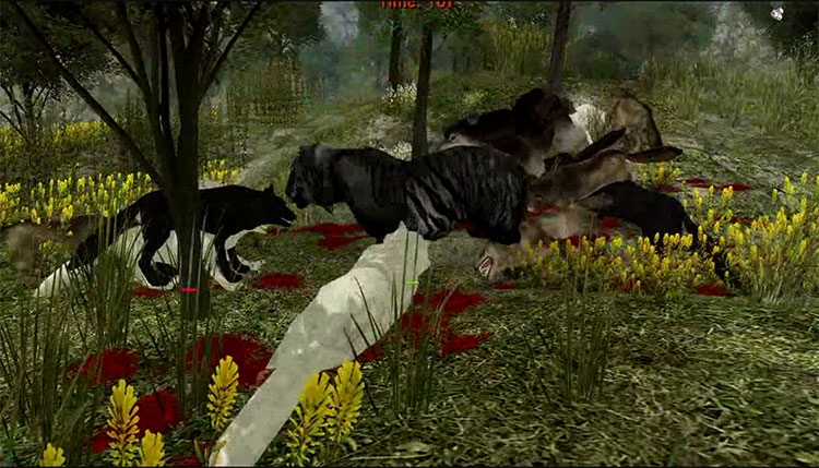 тигр игра и видео