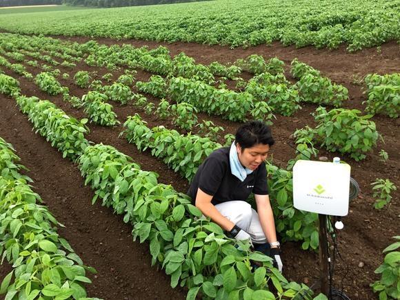 Япония поможет в развитии «умного» сельского хозяйства за рубежом