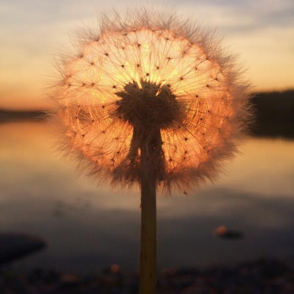 Первое место — закат солнца. Сара Ронкайнен. Финляндия.