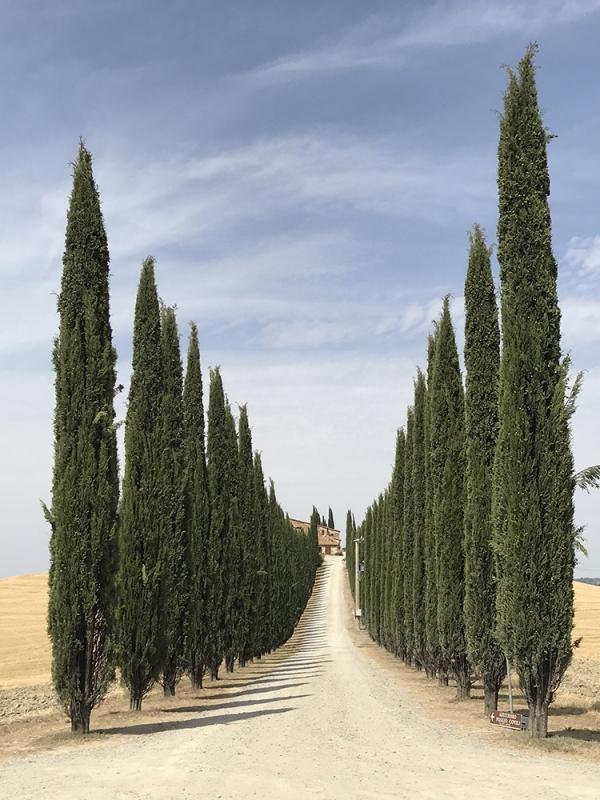 Первое место — деревья. Лидия Мунтян. Румыния.