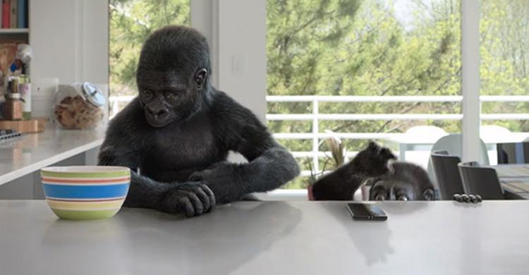 Назван 1-ый смартфон спротивоударным стеклом Gorilla Glass 6
