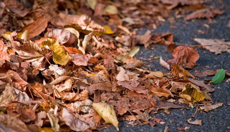 """Опавшие листья могут сравниться по степени опасности для водителей со снегом"""""""