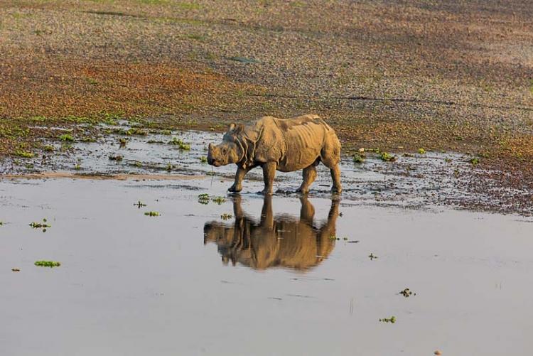 """Крошечные трекеры фирмы Sigfox позволят защитить носорогов от браконьеров"""""""
