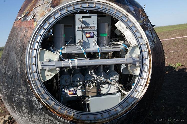"""Запуск спутника «Бион-М» №2 с мышами переносится на 2023 год"""""""