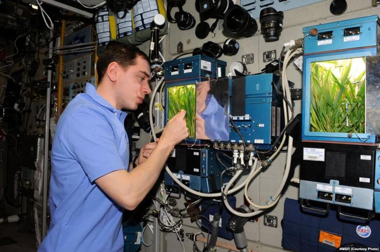"""Утраченную с кораблём «Прогресс» оранжерею для МКС создать заново, вероятно, не удастся"""""""