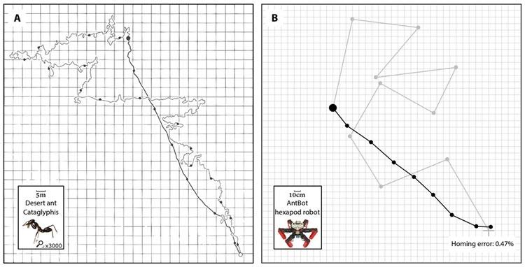 """Учёные создали робота-муравья с полностью автономной навигацией без GPS"""""""