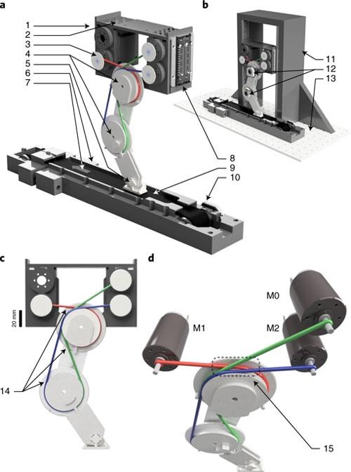 Принцип строения роботизированной конечности в эксперименте учёных (https://www.nature.com)