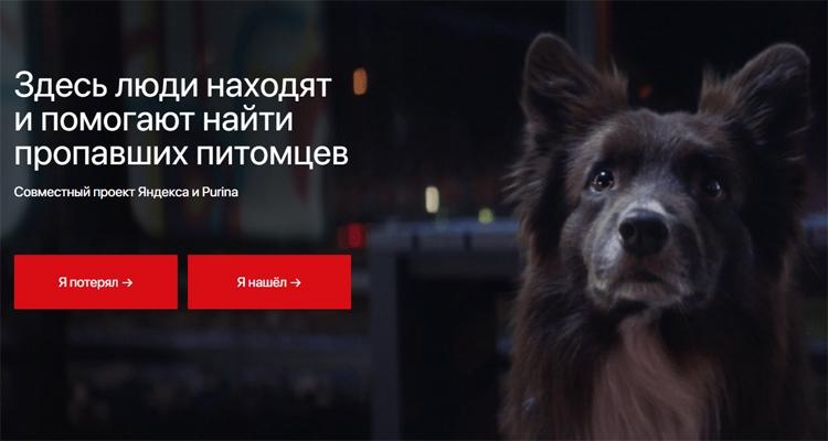 """Потеряна собака: «Яндекс» открыл сервис поиска домашних животных"""""""