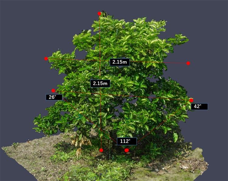 3D-изображение кроны фруктового дерева для анализа и выработки рекомендаций по формирвоанию (NEC)