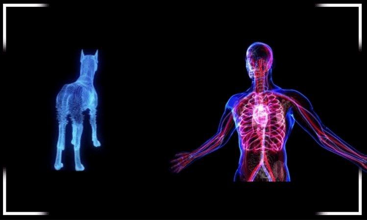 Verisim Life создаст биосимуляторы на базе ИИ, чтобы прекратить испытания лекарств на животных