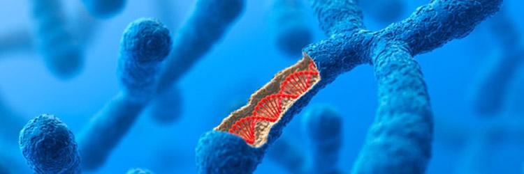 Инвесторы ставят на синтез ДНК для жизни и хранения данных