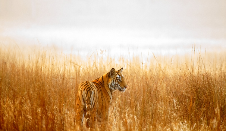 """В Казахстан вернутся тигры — WWF России напечатал дом для сотрудников природной резервации"""""""