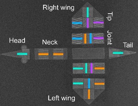 Микроробот-плтица под электронным микроскопом. Цвета - это отдельные магниты с переменной намагниченностью (ETH Zurich)