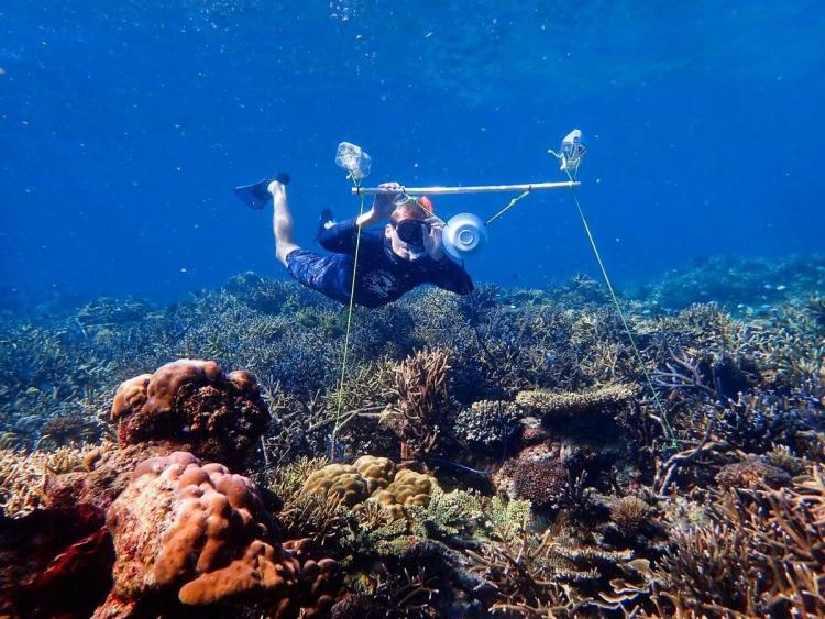 Подводная акустика может помочь спасти коралловые рифы
