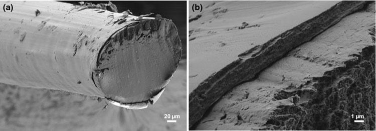 Сечение оптоволокна из целлюлозы под сканирующим электронным микроскопом (Cellulose)