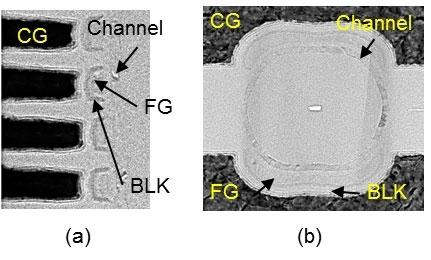 Изображение новой ячейки под электронным микрорскопом ()