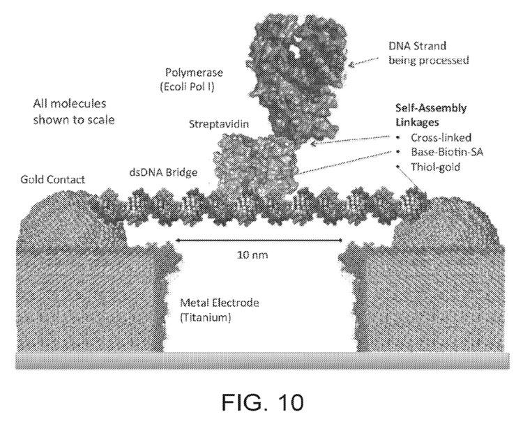 ДНК в ячейке биосенсора