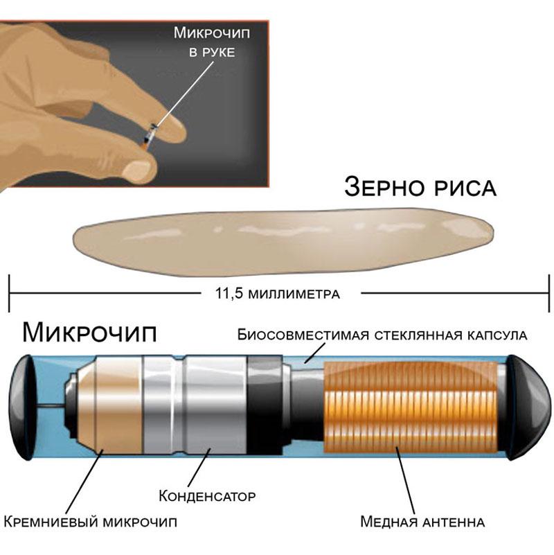 Иллюстрация радиочасттной метки взята с сайта lapkins.ru