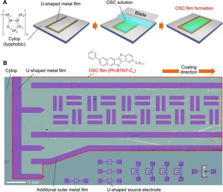Экспериментальный массив TF-транзисторов, изготовленный учёными (иллюстрация из статьи Science Advances)