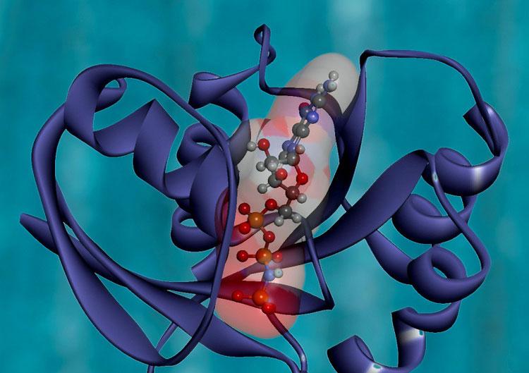 ИИпомог решить проблему сворачивания белка, над которой ученые бились 50 лет