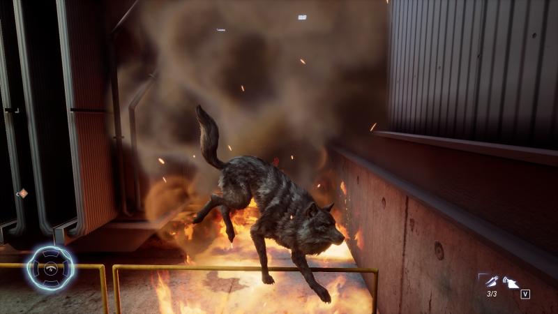 Волк, может, в цирке и не выступает, но номера всё равно готовит…