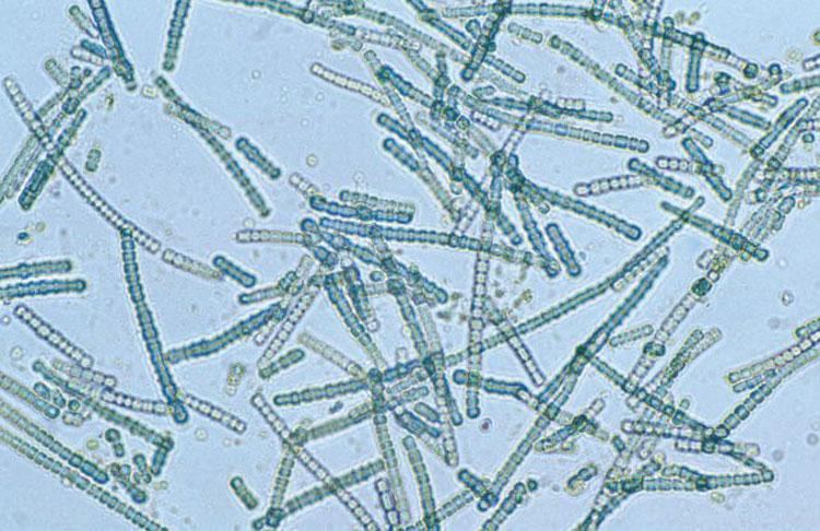 """Земля лишится кислорода через миллиард лет, подсчитали учёные. Выживут только бактерии"""""""