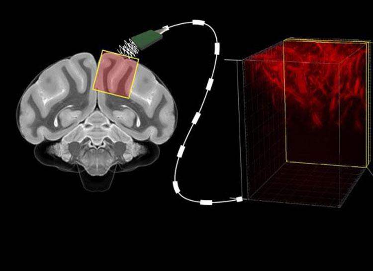 Источник изображения: Caltech