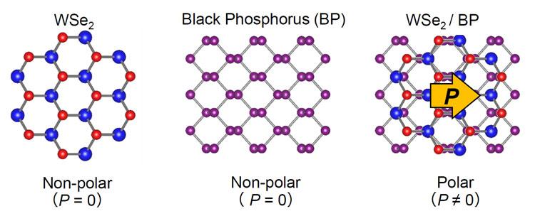 Два 2D-материала в связке ведут себя не так, как каждый из них потдельности. Источник изображения: The University of Tokyo