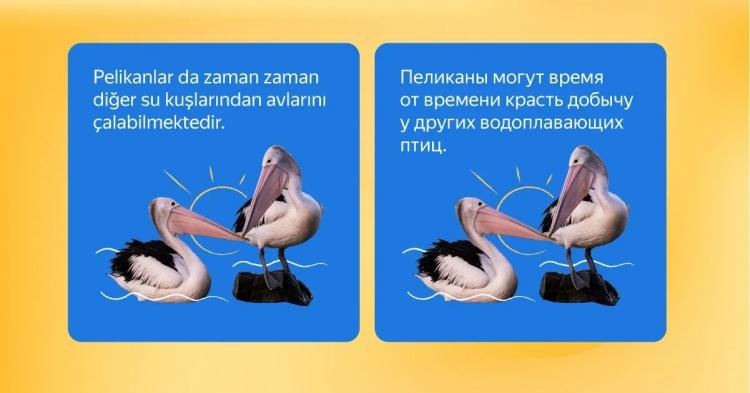 Источник: «Яндекс»
