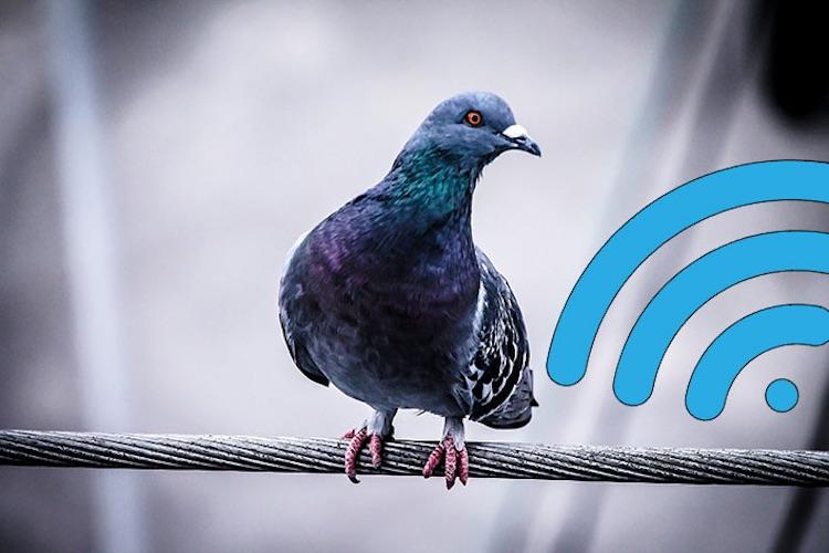 Голуби стали создавать проблемы с приёмом спутникового интернета Starlink