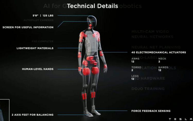Tesla может наладить производство своих человекоподобных роботов Bot в Техасе