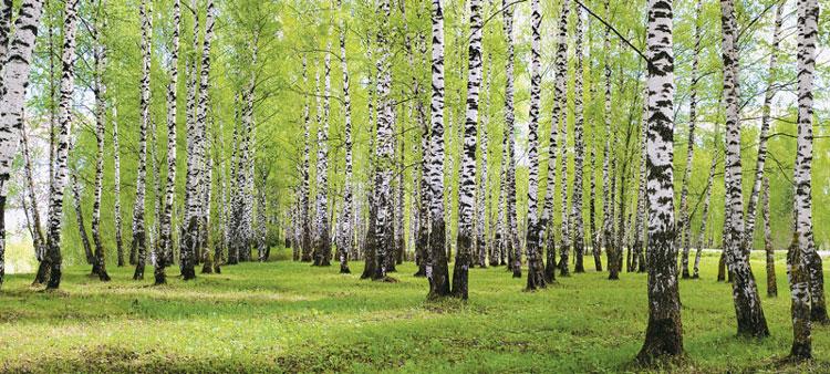 Стратегия низкоуглеродного развития экономики России будет опираться на атом и леса, а не на водород, энергию ветра и солнца