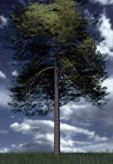 Создания и работы с моделями деревьев работа йошкар ола для девушки